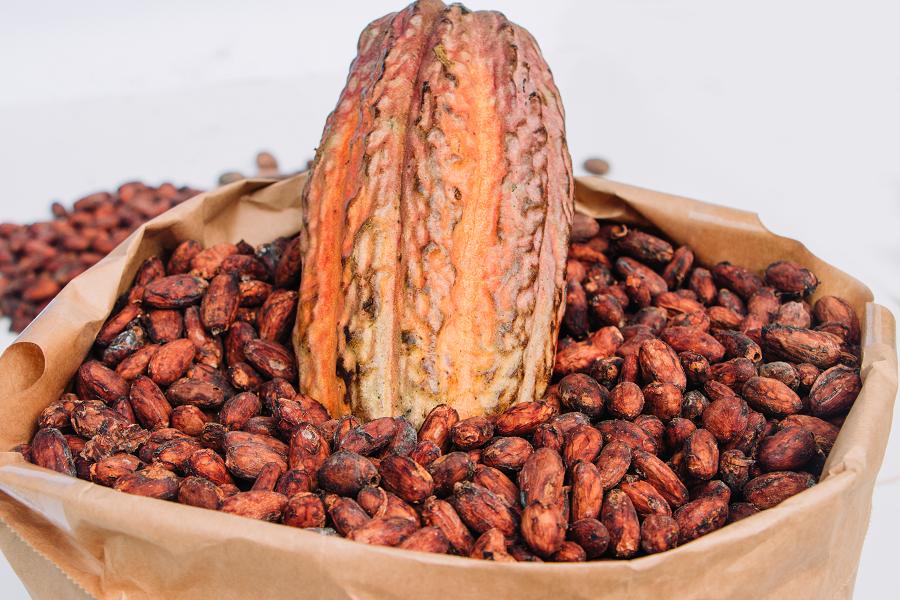 grano-de-cacao-2.png